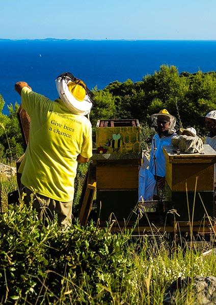 Family honey making on Solta Island