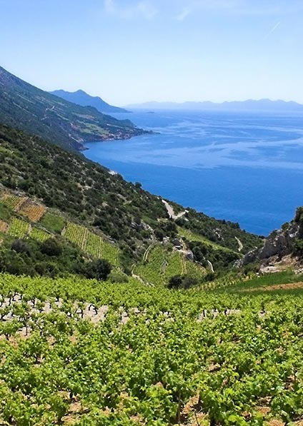 enjoy a wine tour of Pelješac Peninsula with a home-cooked lunch