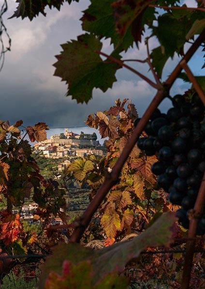 Motovun, Istria - wine tour of Croatia